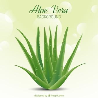 Zusammenfassung Hintergrund Bokeh mit Aloe Vera