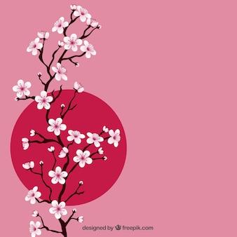 Zweig mit Kirschblüten