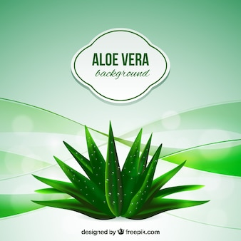 Aloe vera background abstrato