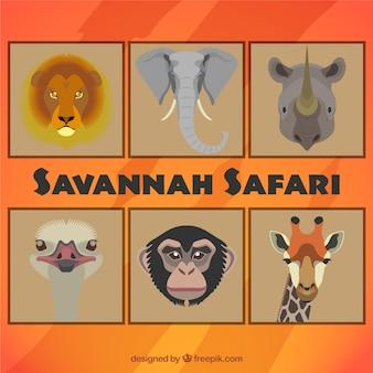 Animais do safari Savannah