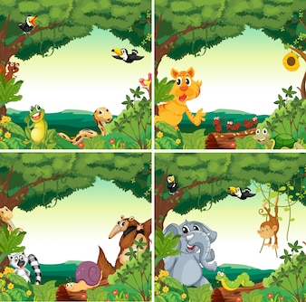 Animais e florestas