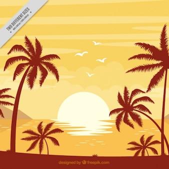 Antecedentes da praia com palmeiras ao pôr do sol