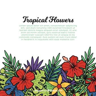 Antecedentes das flores desenhadas à mão