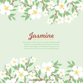 Antecedentes de lindas folhas de jasmim