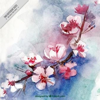 Aquarela flores de cerejeira fundo