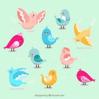 As cores bonitas aves embalar