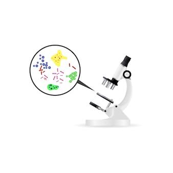 Bactérias sob microscópio