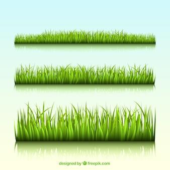 Beiras da grama verde