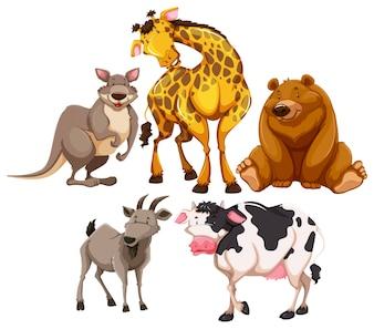 Caráteres de animais selvagens no fundo branco