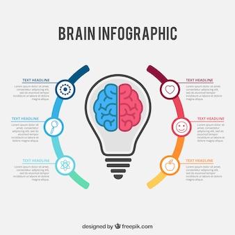 Cérebro colorido modelo de infográfico