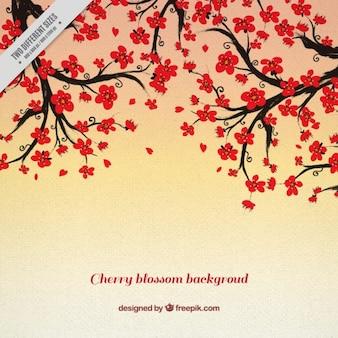 Cerejeiras decorativos fundo