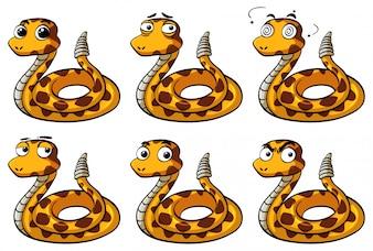 Cobra chocalhada com diferentes expressões faciais