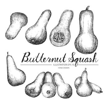 Coleção de abóbora butternut desenhada mão
