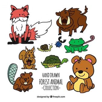 Coleção de animais da floresta desenhadas mão