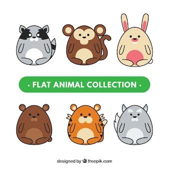 Coleção de animais planos