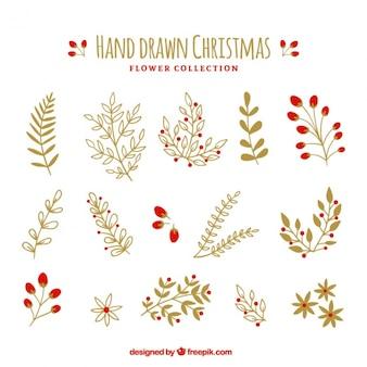Coleção de belas plantas desenhadas à mão