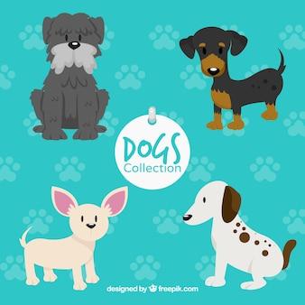 Coleção de bonitos cães