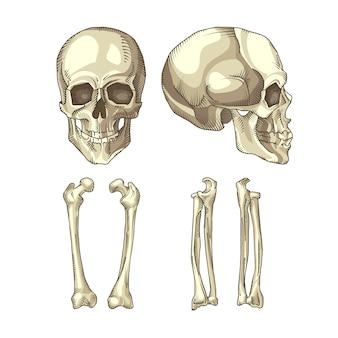 Coleção de crânio e ossos