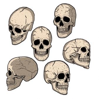 Coleção de design do crânio