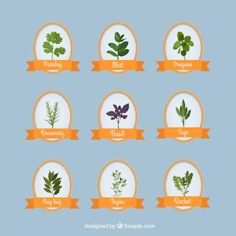 Coleção de ervas aromáticas