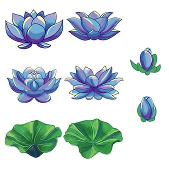Coleção de flores de lótus