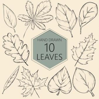 Coleção de folhas desenhadas a mão