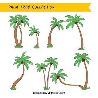 Coleção de hand-drawn palmeiras