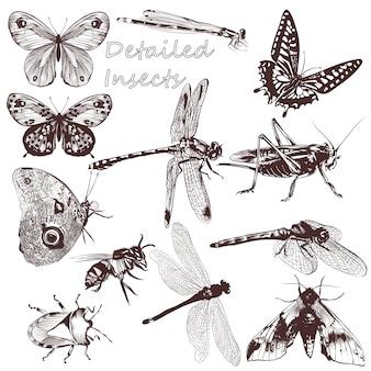 Coleção de insetos desenhados à mão