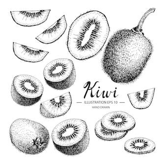 Coleção de kiwi desenhada mão