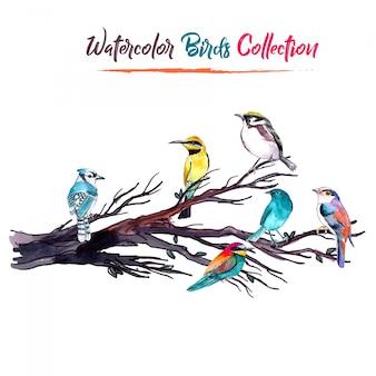 Coleção de pássaros de aquarela