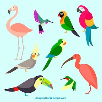 Coleção de pássaros exóticos e coloridos
