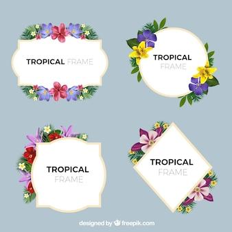 Coleção de quadros elegantes com flores tropicais