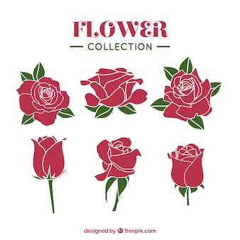 Coleção de rosas com diferentes estilos