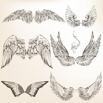 Coleção desenhados mão asas