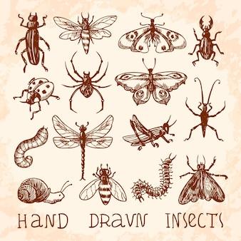 Coleção desenhados mão insetos