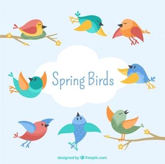 coleção do pássaro lindo no estilo do vintage