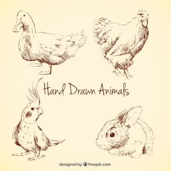 Coleção dos animais desenhados mão