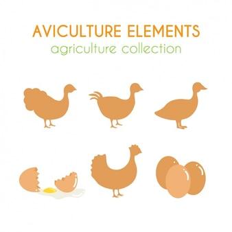 Coleção dos elementos avicultura