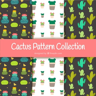 Coleção elegante de padrões de cacto