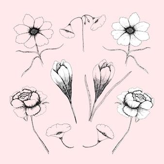 Coleção floral desenhada a mão