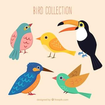 Coleção pássaros bonitos
