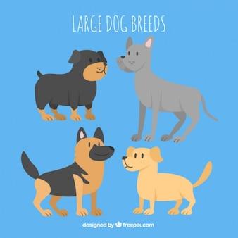 Coleção raça do cão grande