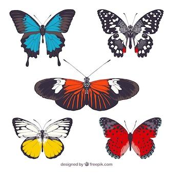 Coleta de borboletas coloridas