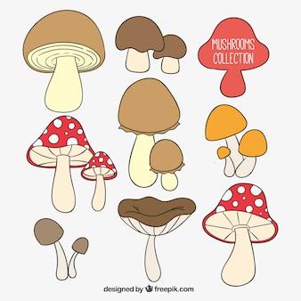 Coleta de cogumelos desenhados mão