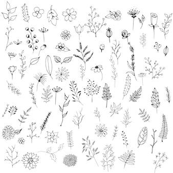 Coleta de flores desenhadas mão