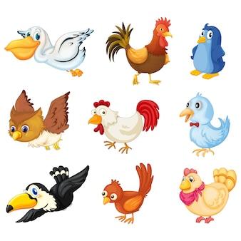 Coleta de pássaros coloridos