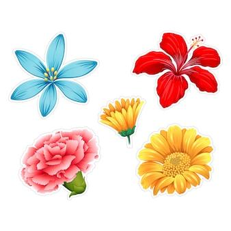 Colorido coleção das flores