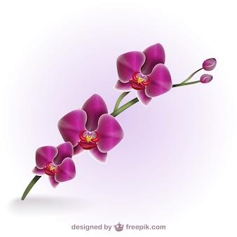 Colorido orquídea artística
