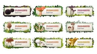 Conjunto de bandejas de vetores de cogumelos deliciosos.