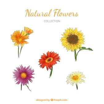 Conjunto de belas flores desenhadas à mão aquarela